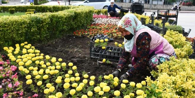 İnegöl'de 200 Bin Çiçek Toprakla Buluşuyor