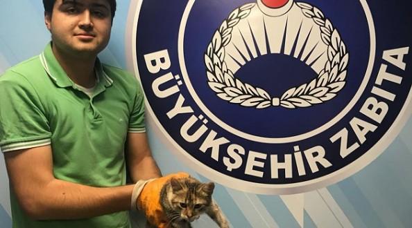 Yaralı kediye Büyükşehir şefkati